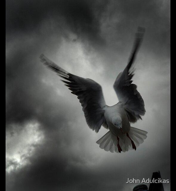 doomed bird by John Adulcikas