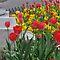 """""""Blooming Flowers of Spring"""""""