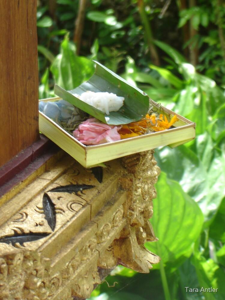 Balinese Offering by Tara Antler