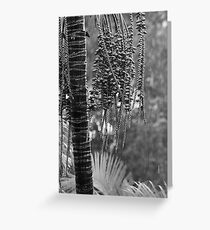 Palm in the rain Greeting Card