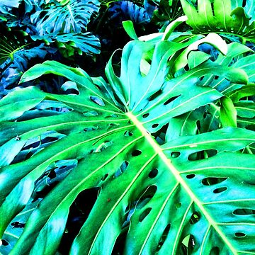 Monstera Botanical - Vibrantly Green Tropical Foliage by SweetDominique