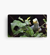 "Fiji Crested Iguana (1) - The ""Fiji"" Collection 2017 Canvas Print"