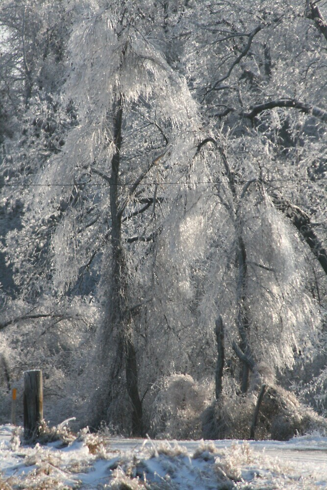 Ice covered tree by Rick  McFarland
