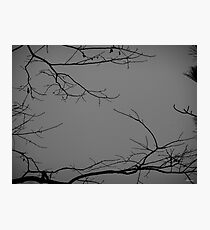 Reality, framed.  Photographic Print