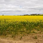 Canola Field, York, Western Australia by Elaine Teague