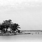 Woodland Beach by nastruck