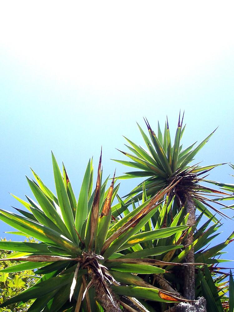 tropical plants by laurenpagni