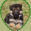 Puppy in Heart by Sandy Keeton