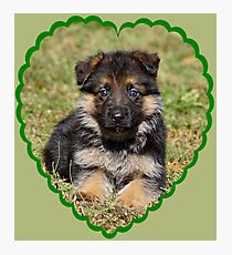 Puppy in Heart Photographic Print