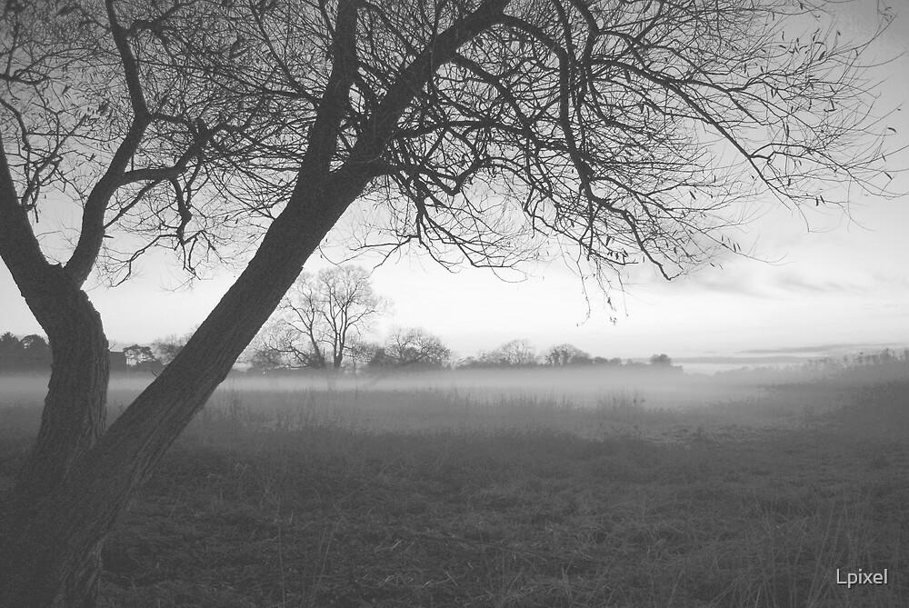 Tree in the fog by Lpixel
