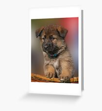 Darling Puppy Greeting Card