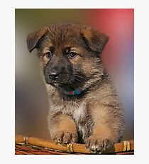 Darling Puppy Photographic Print