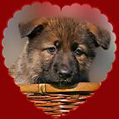 Puppy Red Heart by Sandy Keeton