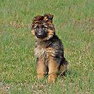 Puppy Halo by Sandy Keeton