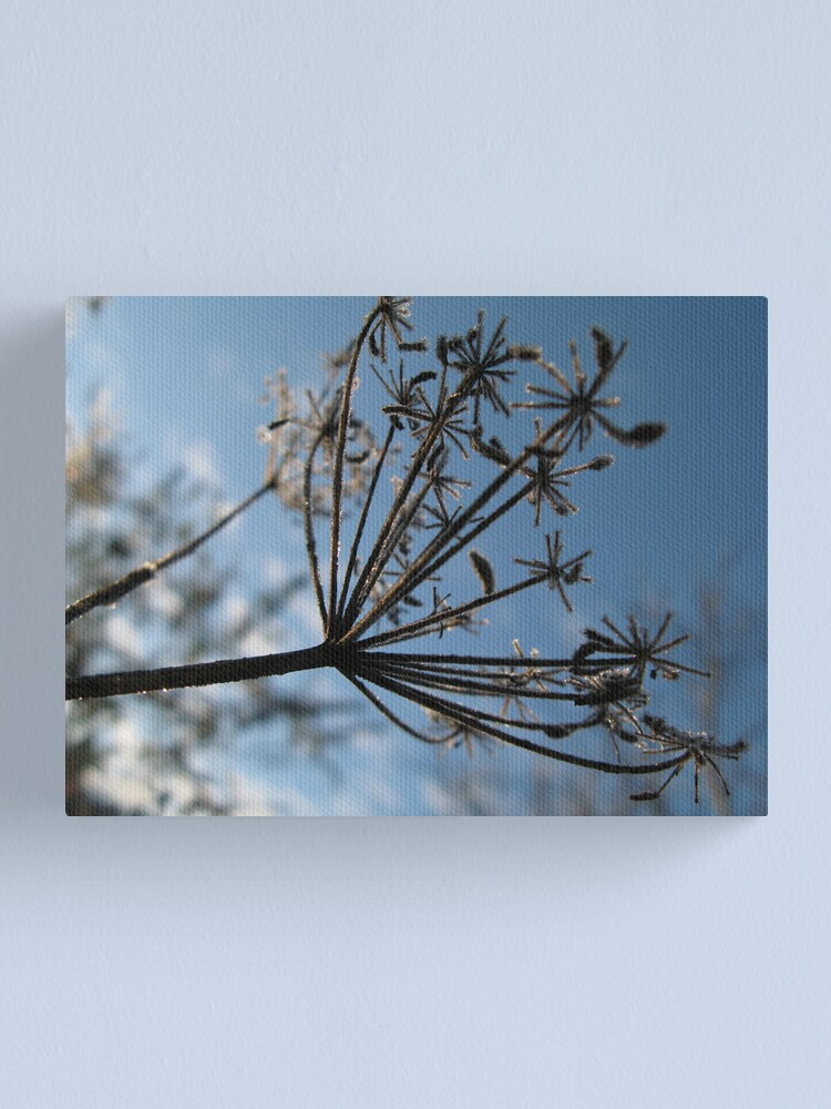 Alternate view of Frosty Stems #5 Canvas Print