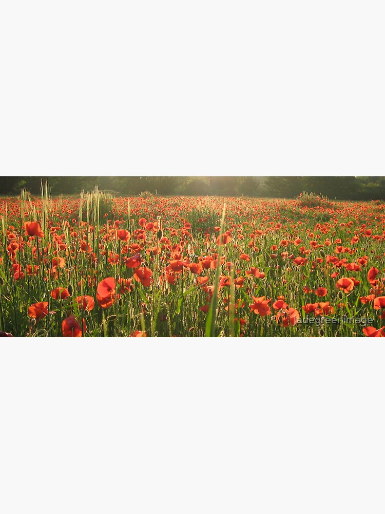Poppy Field by jadegreenimage