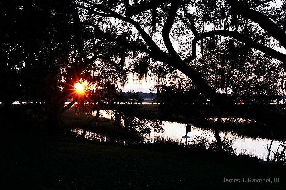 Sunset Through The Trees by James J. Ravenel, III