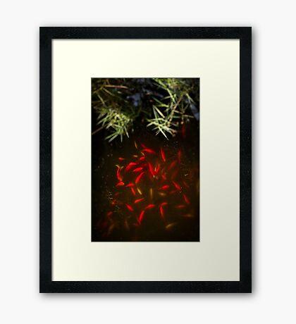 Goldfish pond Framed Print