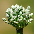 Beautiful Bouquet by ~ Fir Mamat ~