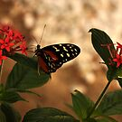 Summer Butterfly by CSRoth
