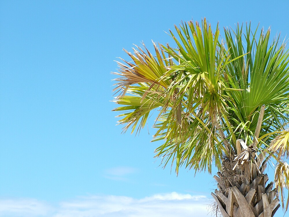 Palm Tree by sommershots