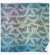 Lepidoptera Blue Poster