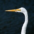 Great Egret by Bob Wall