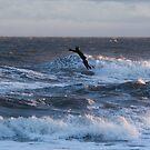Flying Surfman by KarenDinan