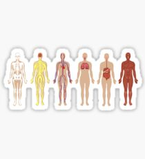 The Human Body Systems Sticker