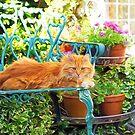 Sleepy Garden Kitty - Impressions by Susie Peek