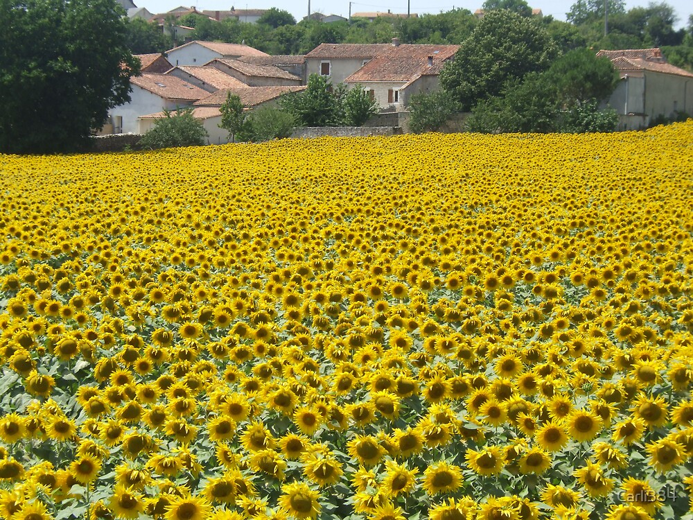 Sunflowers, France by Carli384