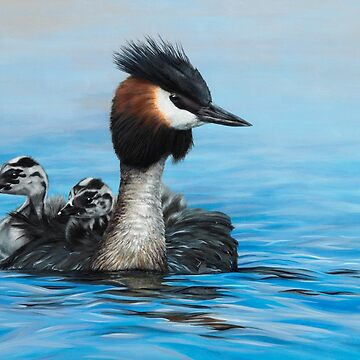 Reflections – Australasian Crested Grebes by MCColyer