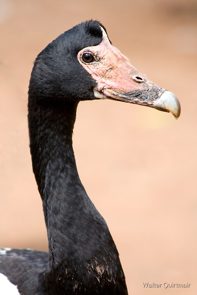 Bird by Walter Quirtmair