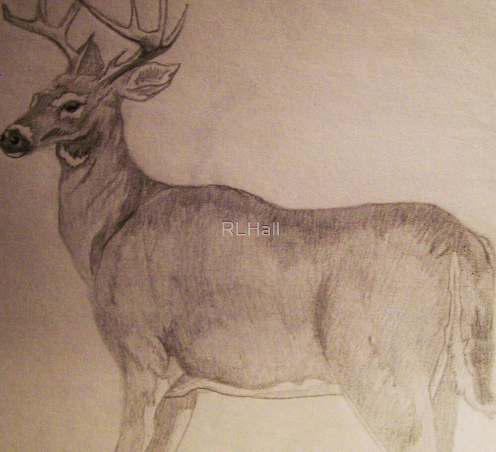Young Buck 2 by RLHall