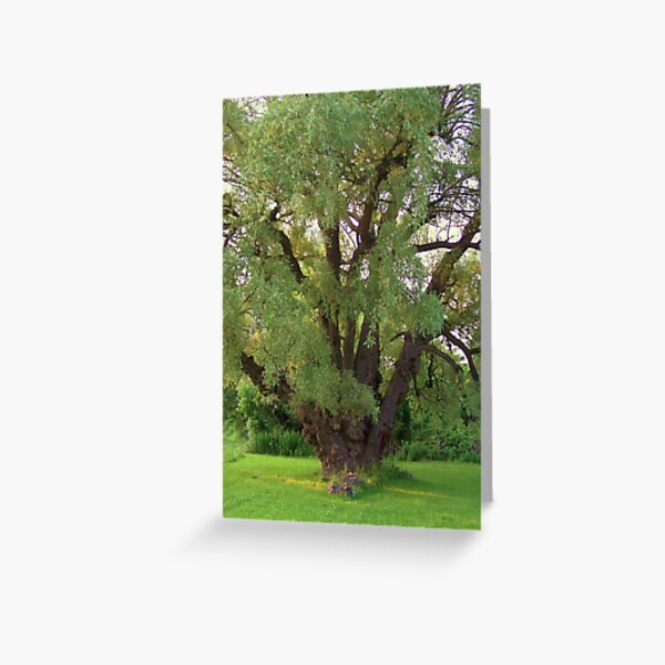 Save a Tree, Save the World Greeting Card
