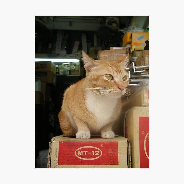 Cat model MT-12 h Photographic Print
