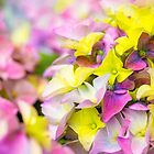 Easter colours by Manon Boily