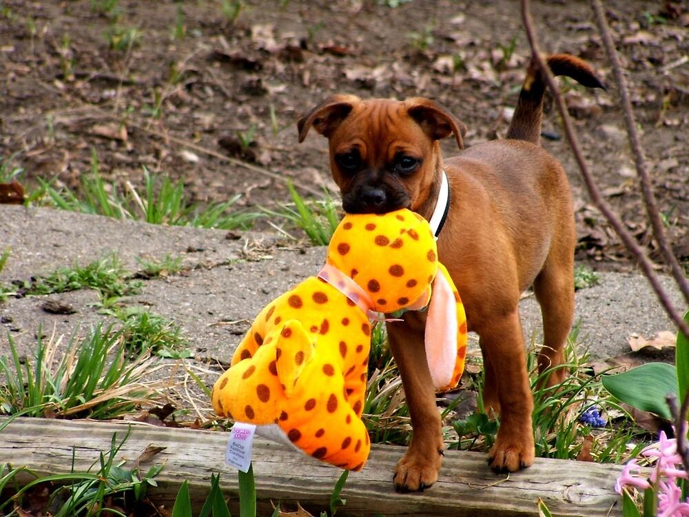 Puppy With Puppy by GeraldU1