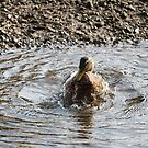 Duck Wash by kalaryder