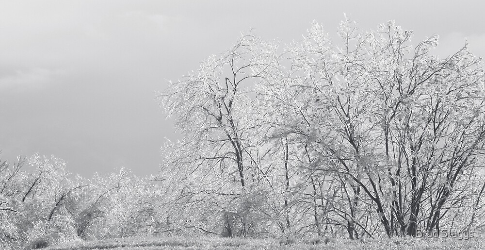 Ice Trees by Brad Staggs