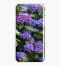 Blue Beauties - Hydrangea Blossoms iPhone Case/Skin