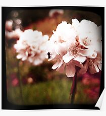 PINK BLOSSOM WITH ANT Poster
