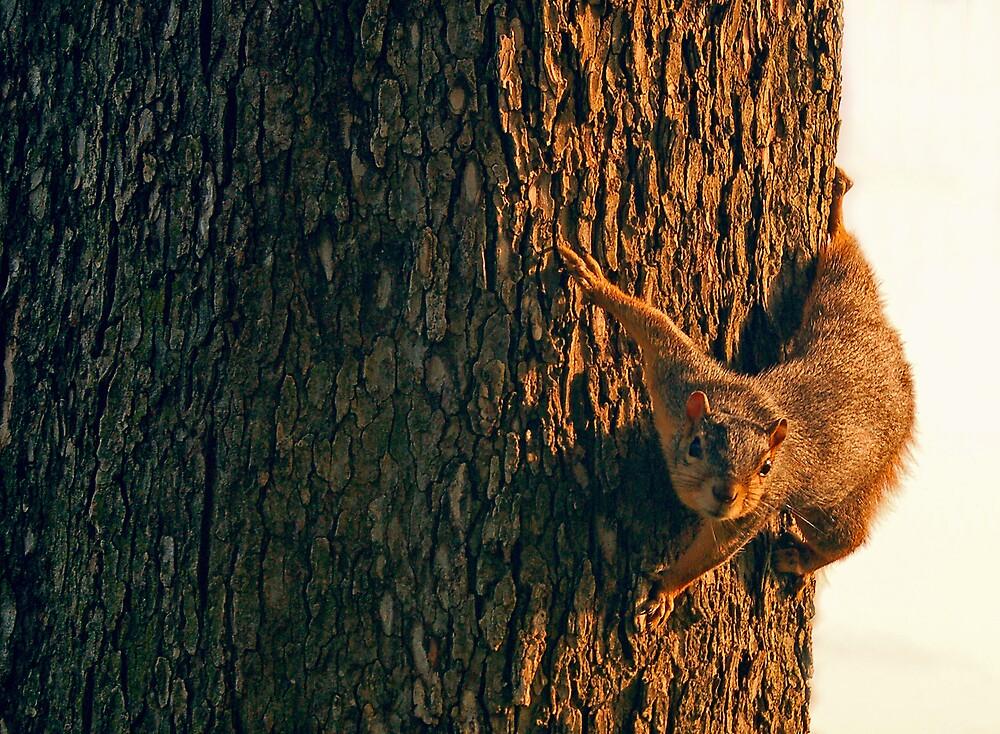 Ninja Squirrel by John Gillis