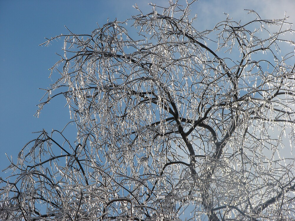 Icy Trees by Laura Jauernig