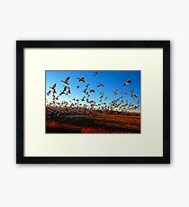 Fright Flight of the Snow Geese Framed Print