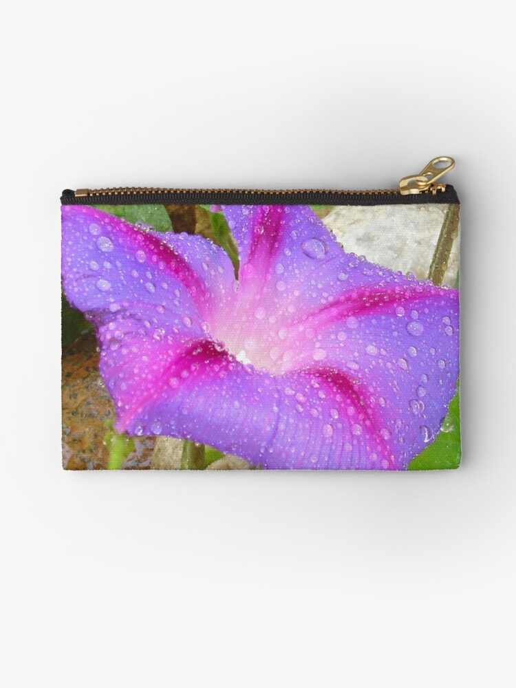 Mauve and Magenta Morning Glory with Water Drops by taiche