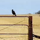 Australian Country Life by Michael Humphrys