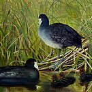 New Beginnings - American Coot by John Houle