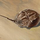 Stranded - Horseshoe Crab by John Houle