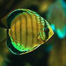 A fish by Dominika Aniola
